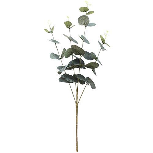 Planta De Eucalipto  marca Zaofahua