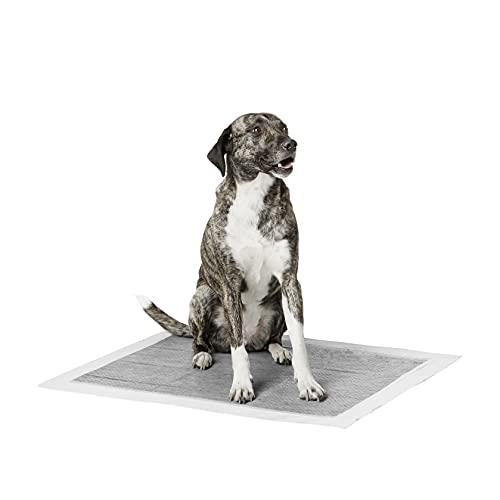 Amazon Basics - Tappetini igienici con carbone attivo per l'addestramento di cagnolini e altri animali domestici, misura extra-large, 30 pezzi