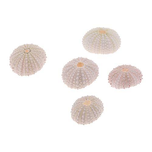 B Blesiya 5pcs Muschel Aquarium Landschaft Dekoration - weiße Seeigelschale