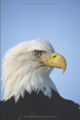 Meine Vogelkunde: Ein Notizbuch für meine persönlichen Beobachtungen