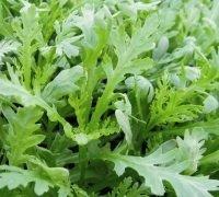 Just Seed Chopsuey verts???Chrysanth?me Coronaria???5000?Graines