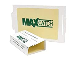 small Catchmaster 72MAX plague trap, 36 counts, white