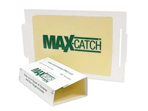 Catchmaster 72MAX Pest Trap, 36Count, White