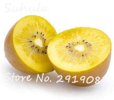SEEDSOWN Big 200 Pcs Graines Kiwi Fruits Bio délicieux légumes n de semences Ed Arbres en Pot de Accueil Livraison Gratuite Easy Grow