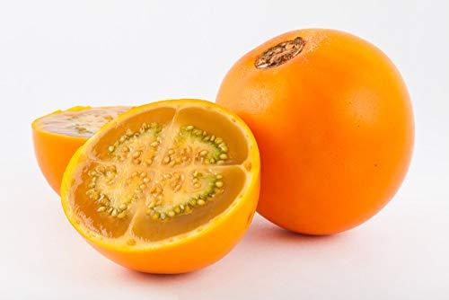 Asklepios-seeds® - Solanum quitoense, 200 Samen, Lulo, Naranjilla