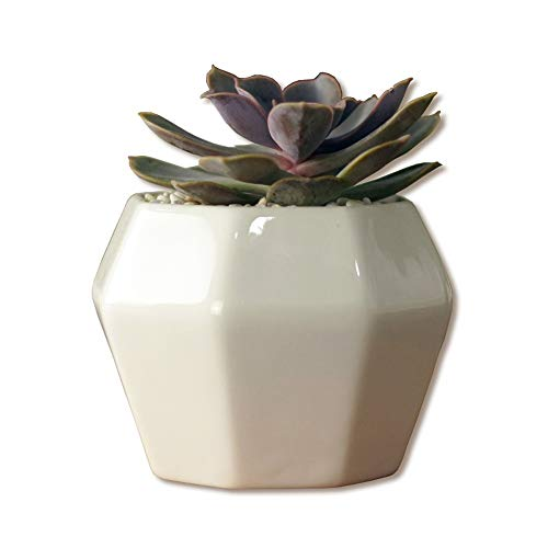 Bcaer Maceta de cerámica blanca con diseño de personalidad, pequeña pila, cerámica carnosa, maceta octogonal, interior enana para el hogar, oficina, escritorio, ventana, balcón, decoración