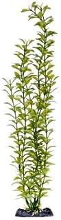 Penn Plax PP05560 Blooming Ludwigia Green Super