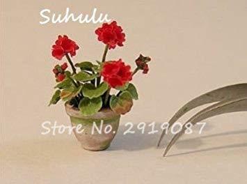 Vistaric 100pcs Rare Mini Geranium Graines Vivaces Belles Fleurs Graines Pelargonium Peltatum Graines disponibles bonsaï en pot mélange couleurs 17