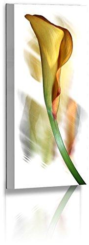 Fotoatelier Dirk Haas Premium Aludibond XXL - Natur - Blumenfotos - Calla - Blume - Abstrakte Bilder - Aludibond : 40 cm x 20 cm