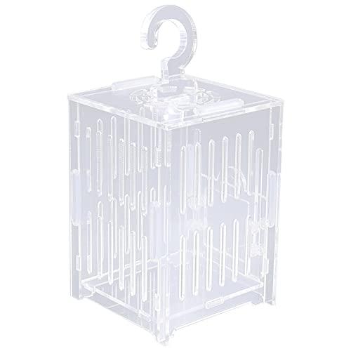 Balacoo Caja de Jaula de Grillo Saltamontes Jaula de Insectos Acrílica Transparente Caja de Insectos Vista de Observación Clara Jaula de Insectos Contenedor para Mariposa Y Reptil