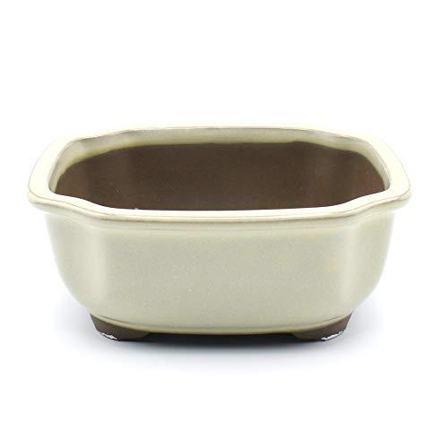Bonsai Pot Ceramic Mokko (Quince) Shape Glazed (6.5', Cream-Yu)