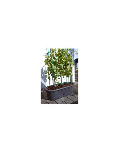 Elho Green Basics Veggie Wall Übertopf, Living Schwarz, 78 cm