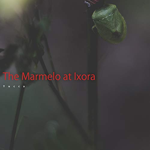 Sarracenia Lunaria