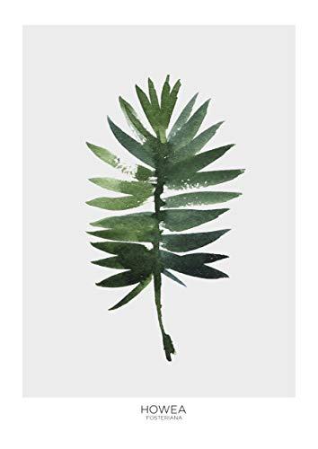 Desconocido LÁMINA BOTÁNICA HOWEA - póster Plantas