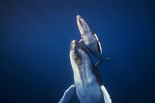 Wale - Papel pintado fotográfico (fieltro, 300 x 223 cm, 6166A, diseño de ballena, peces subacuáticos, animales, incluye pasta de fieltro, decoración de pared, diseño moderno, póster panorámico XXL