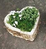 Pflanzherz Grabschmuck Birkenrinde Zum Bepflanzen Pflanzschale Herz als Gartendeko Terrassendeko