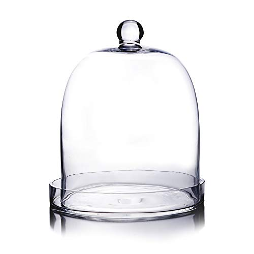 CYS EXCEL Glass Bell Dome Jar with Tray, Dessert Display, Candy Buffet Showcase, Plant Terrarium Cover Pack of 1