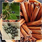 PLAT FIRM SEMI DI GERMINAZIONE: Cinnamomum 5 Samen, Zimt, Cassia, GewÌrze GewÌrzkrÀutersamen, aus Thaïlande