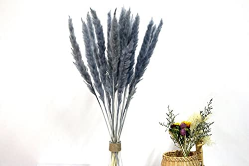 Discount is also underway S-Center White Black Dried Pampas for Grass Outdoor Rabbit Bombing free shipping Tail