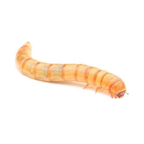 proinsects Lebende Mehlwürmer (1 kg)
