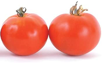 Best oregon spring tomato size Reviews