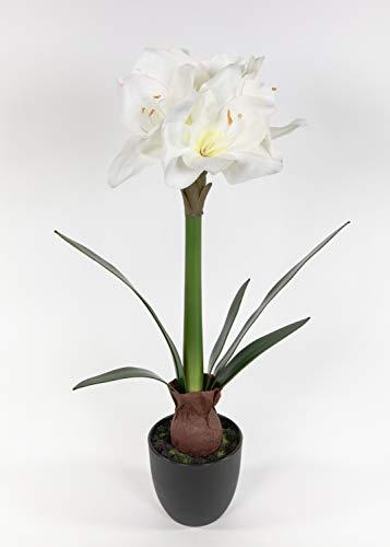 Seidenblumen Roß Amaryllis mit Zwiebel Real Touch 56cm weiß im Topf DP künstliche Blumen Pflanzen Kunstblumen Kunstpflanzen Ritterstern