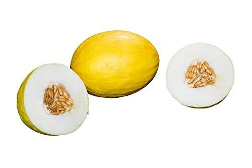 Honigmelone (Honigmelonen) 10 frische Samen (Zum selber Züchten)