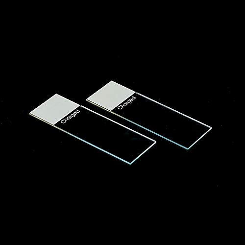 Charged Slides, Ground Edges, Positively Charged, 2 Boxes of 72/Unit (1 Gross)