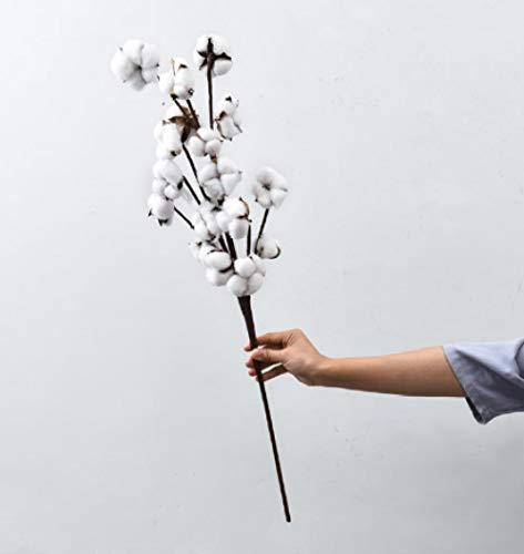 pah-macy Ramo de Flores Secas Naturales Ramas Algodon Artificial Flor de Algodon Seca Blanco Flores Hogar Bodas Fiestas Cocina Escritorio Restaurante-Algodón Largo 3_Ramas secas