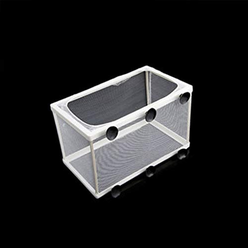 Carry stone  Aquarium Guppy Zucht Züchter Fisch Baby Gaze Falle Box Isolator