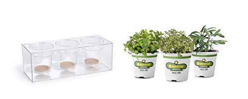 Bonnie Plants Clear Planter & Cooking Herbs 3 Pack   Indoor Self Watering Pot  ...