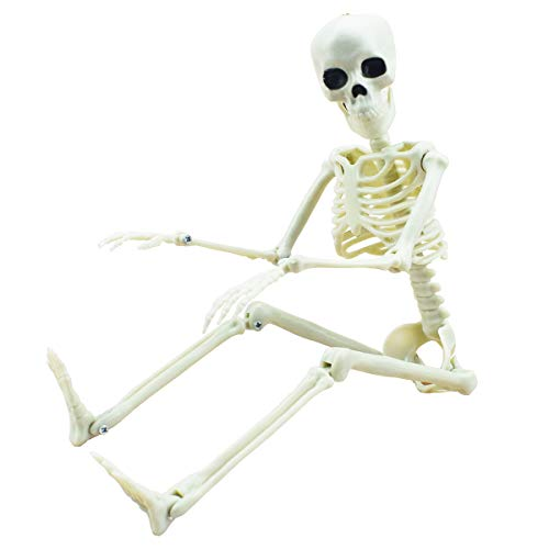16 Posable Halloween Skeleton- Full Body Halloween Skeleton with Movable Joints for Haunted House Props Decorations