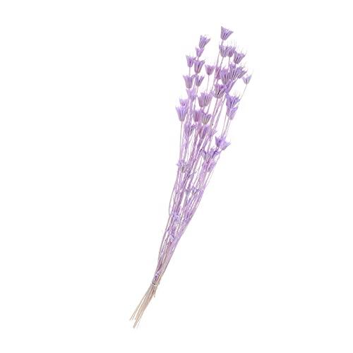 Prezent Suszony bukiet kwiatów anyżu gwiazdkowatego, gałązka anyżu naturalnego dla majsterkowiczów Bukiet wieniec Home Office Dekoracja weselna na przyjęcie- fioletowy (Color : Purple)