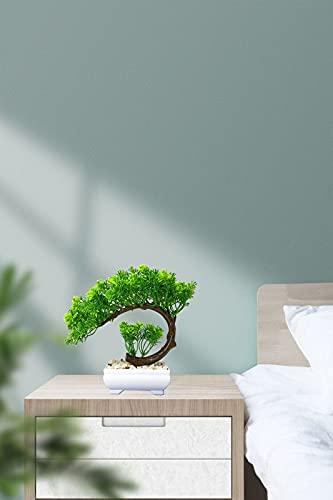 AIVORIUY Plantas