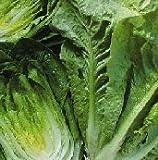 Lettuce Parris Island...image