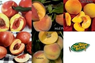 Amazon Com 4 N 1 Fruit Salad Tree With 4 Of These Varieties