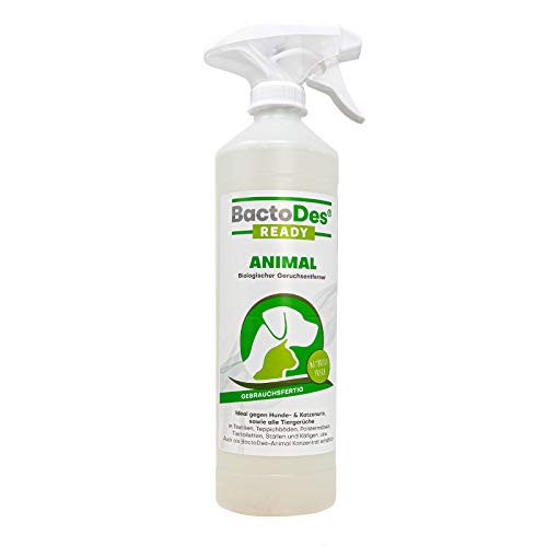 BactoDes Animal Ready – Smacchiatore spray pronto all\'uso, detergente enzimatico per urina di gatto, per animali domestici, 1 litro