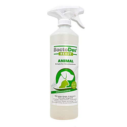 BactoDes Animal Ready - Geruchsentferner Fleckenentferner Spray, Gebrauchsfertig, Enzymreiniger gegen Katzenurin, Hundeurin, Tiergerüche, 500 ml