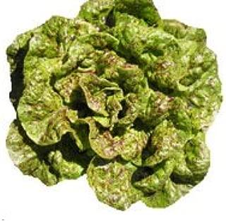 Lettuce - Butterhead-Bibb Speckles 5,000 seeds