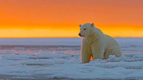 QTDZSWGS Kit de pintura al óleo por números, para adultos principiantes y niños, con pincel y pigmento acrílico, 40 x 50 cm (sin marco) – oso polar Alaska nieve