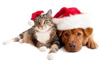 the gift shop Christmas Dog and Cat Santa Hats with treats Hamper