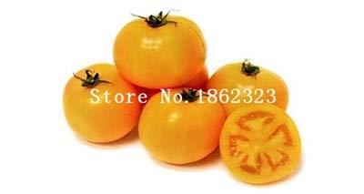 Shopmeeko Graines: 100 pcs/sac bonsaï arc tomate, plante rare de tomate, de légumes bonsai & amp organique; bonsaïs de fruits, plantes en pot pour la maison & amp; jardin: 10