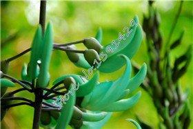 100pcs 24 sortes de style différent rares Graines de fleurs, en Californie Flower Seeds jardin bonsaï plante, 3 sacs + cadeau Mysterious