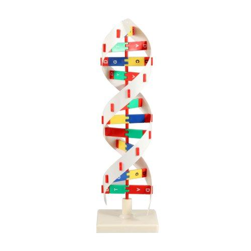 ARTECH ADN modelo B 8983(importación de Japón)