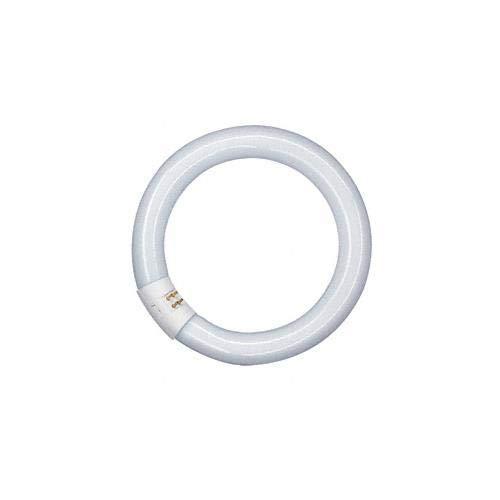 Osram Lumilux T9 C Leuchtstoffröhre, G10Q-Sockel, 22 Watt, Kaltweiß - 4000K