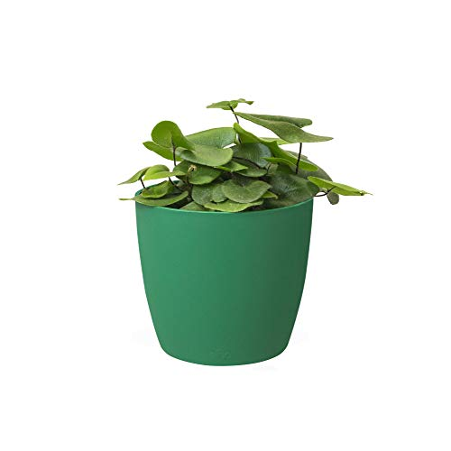 Elho Brussel rond Mini 7 - bloempot - antraciet - binnen bloempot 7 cm Lucky Green