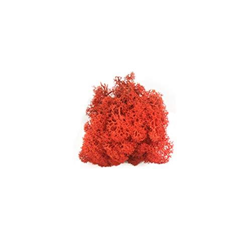 lujiaoshout Planta Falsa Artificial Musgo Musgo Musgo de Reno para el Arte de DIY Decoración- Rojo