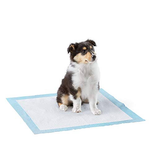 Amazon Basics Dog and Puppy Pee, Heavy Duty Absorbency Potty Training Pads with Leak-proof Design and Quick-dry Surface, Regular (24 x 23 Inches) - Pack of 80
