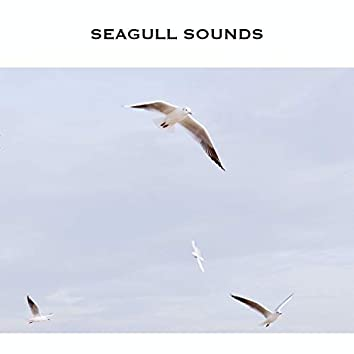 Seagull Sounds (Seagull Noise)