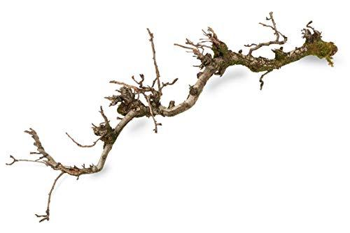NaDeco Dekozweig Birne mit Moos ca. 100cm Deko Zweig Natur Zweig Dekobaum Dekobaum Dekozweige Dekoholz Deko Baum Spalier Zweig